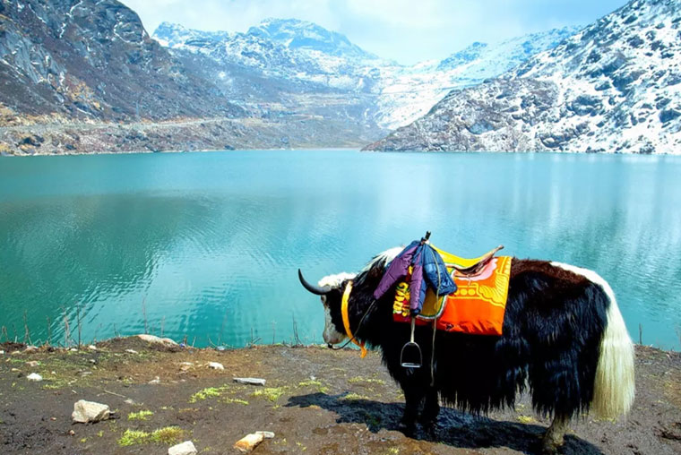 Trekking in Sikkim,Sikkim Tour,Hotels in Gangtok,Hotels in Sikkim,Travel Agent in Sikkim, Sikkim Travel Agent, Tour Operatour in Sikkim, Sikkim Tour Operatour, Sikkim Tour and Travel, Tour and Travel in Sikkim, Travel Agent in Gangtok, Gangtok Travel Agent, Tour Operatour in Gangtok, Gangtok Tour Operatour, ,Sikkim Tours and Travels, Tour and Travel in Gangtok, Gangtok Tour and Travel, Tours and Travels in Gangtok, Gangtok Tours and Travels,Tour Operatour, Gangtok, Sikkim, Dzongri Trek, Trekking in Sikkim Himalayas, North Sikkim Tour, Yumthang valley, Gurudongmar lake, Chopta Valley, Thangu, Changu lake, Babamandir, Namchi, Maenam, Ravangla, Geochala Trek, Baba Harbajan Singh, Samdruptse, Temi tea Garden,Sikkim Travel Information, Sikkim Trekking and Tours, Himalaya India Tour, Himalaya India Tour Packages, Himalaya Tour Operator, Travel Agent and Tour Operator in Gangtok, Trekking in Sikkim, Travel, North Sikkim Travel Agent, South Sikkim Travel Agent, East Sikkim Travel Agent, West Sikkim Travel Agent, Rumtek Tours, Rumtek Travels,
